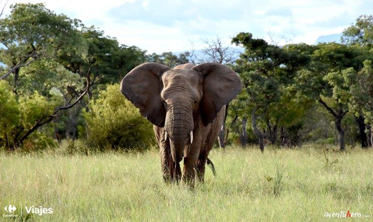 1 Aventuhero - El elefante.jpg